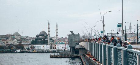 Turkey | Turkey 6