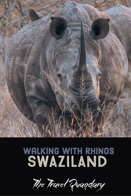 Pin to Pinterest | A Walk With Rhinos In Swaziland