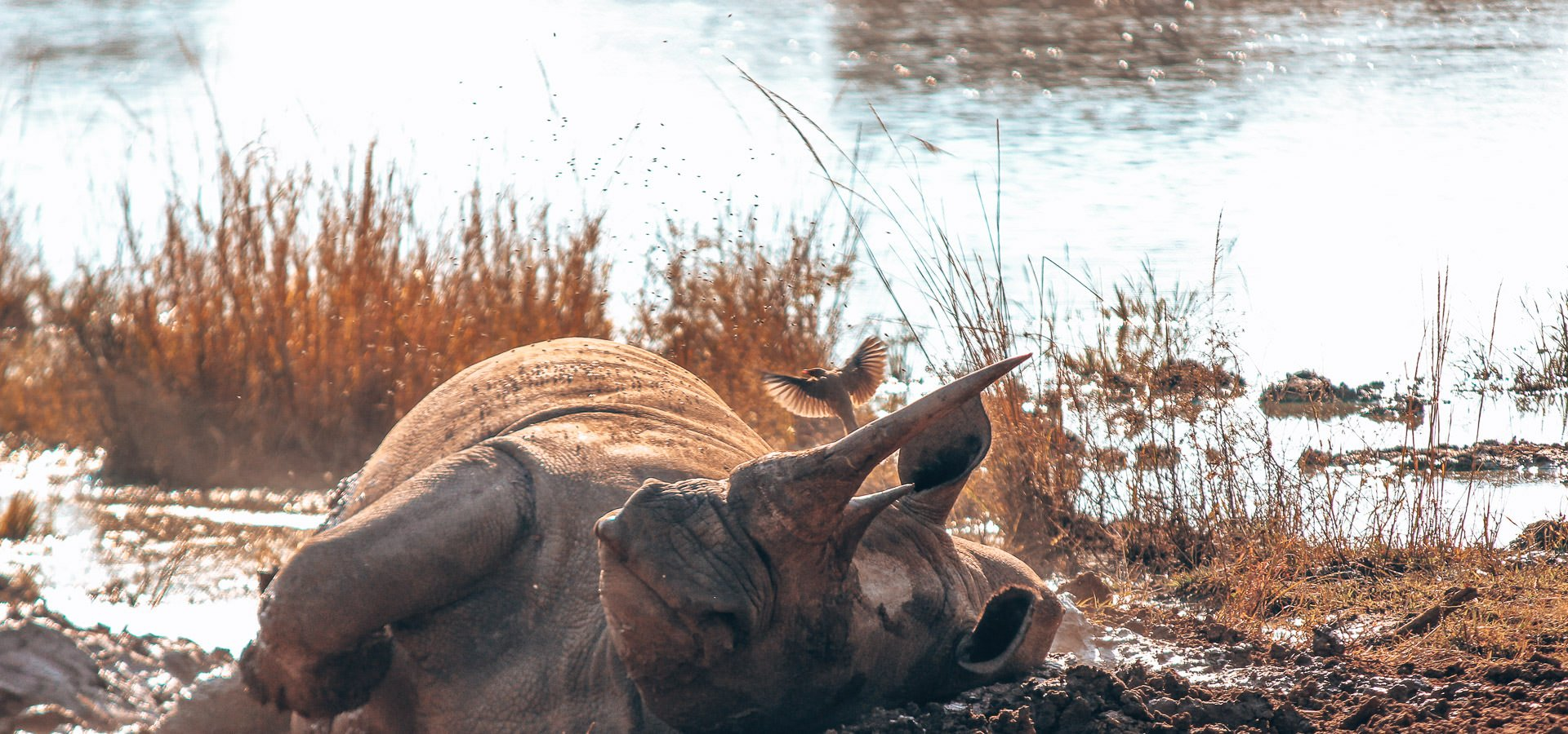 A Walk With Rhinos In Eswatini (formerly Swaziland) | walk with rhinos in swaziland 4