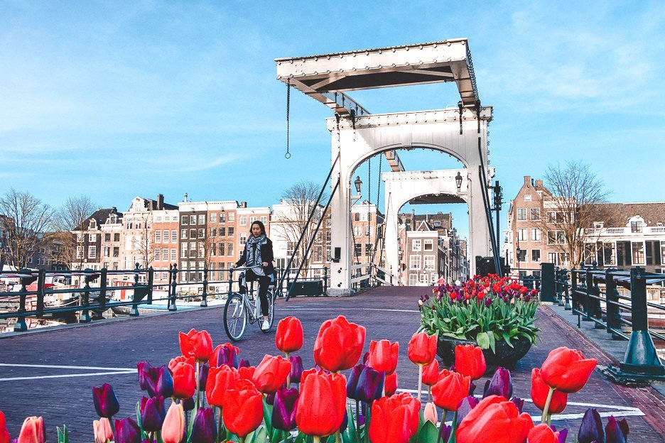 Riding next to tulips across Magere Brug, Amsterdam