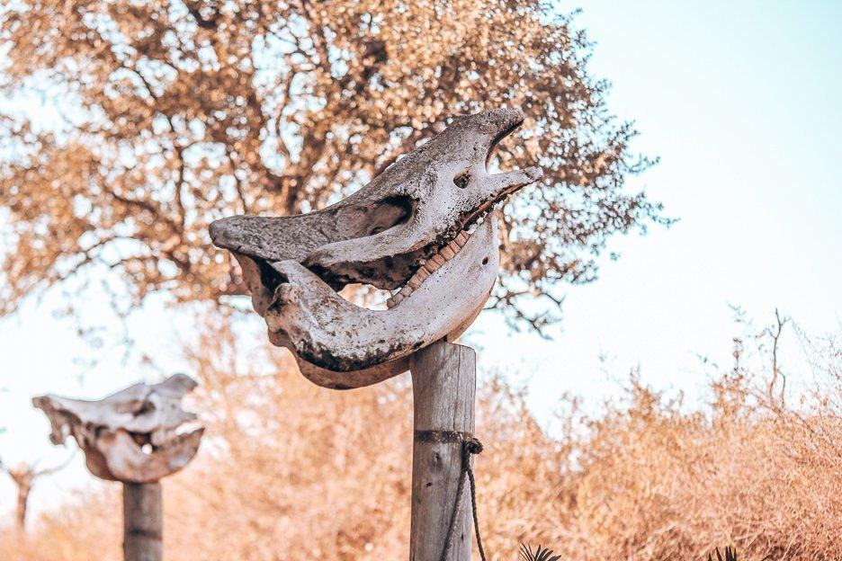 Rhinoceros skull upon wooden perch, Swaziland