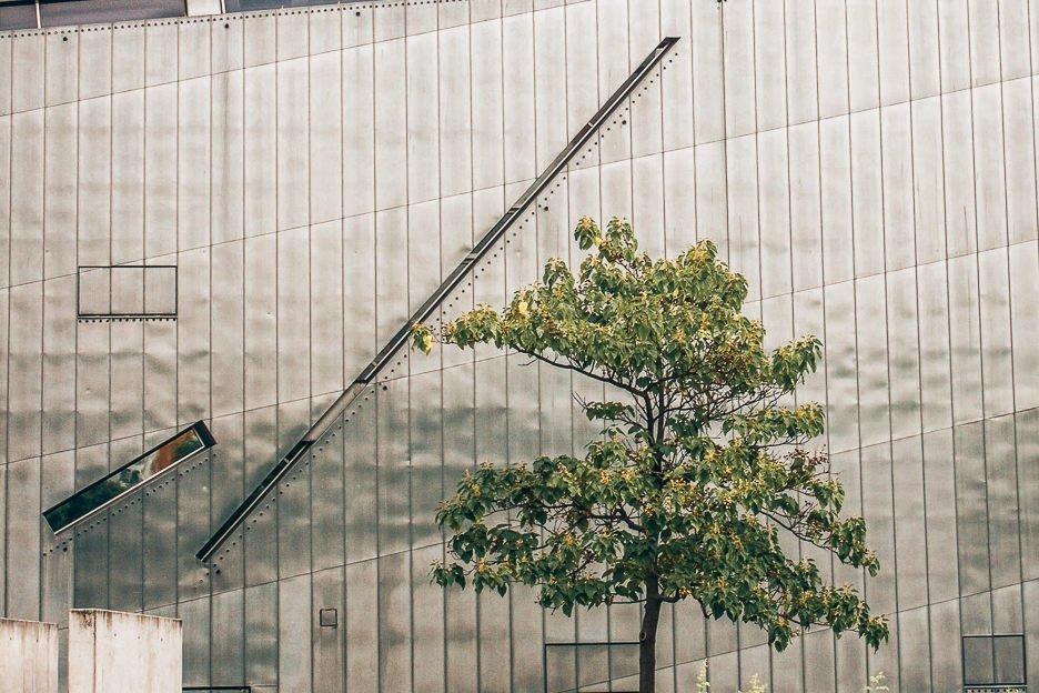Tree outside the Jewish Museum in Berlin