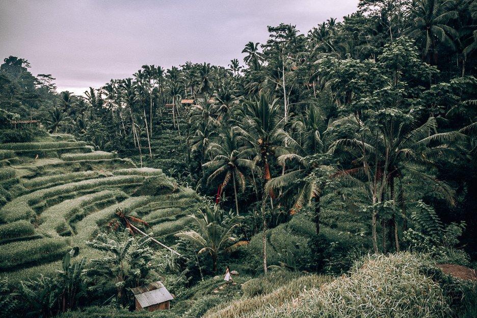 Indonesia   indonesia 6