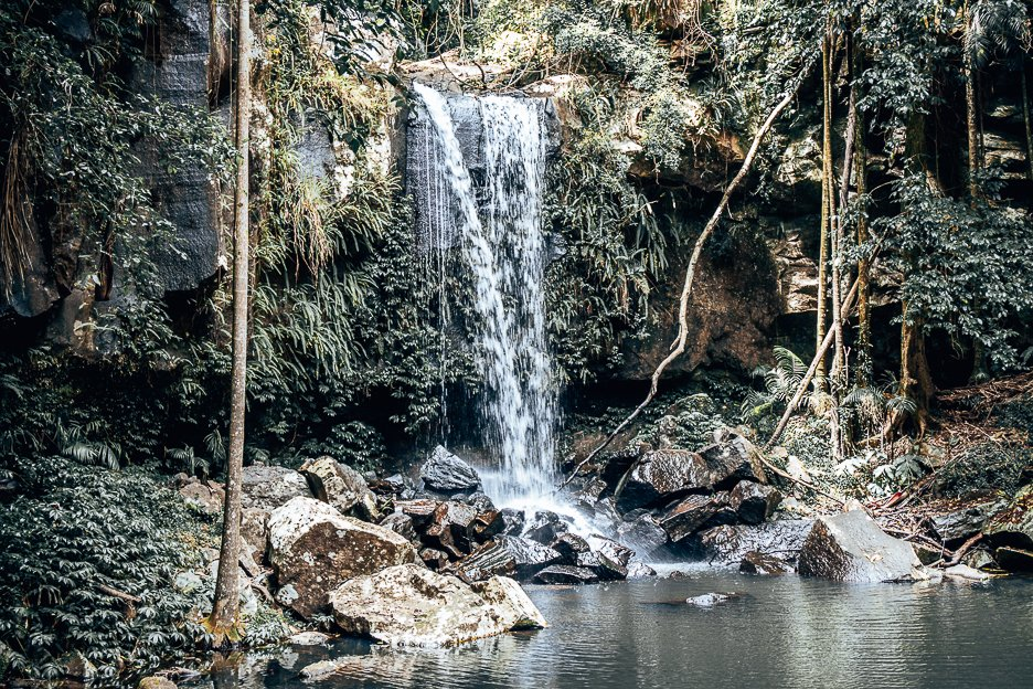 Curtis Falls in Tamborine Mountain | towns to visit near Brisbane