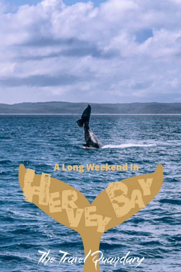 Pin Photo | Whale watching hervey bay