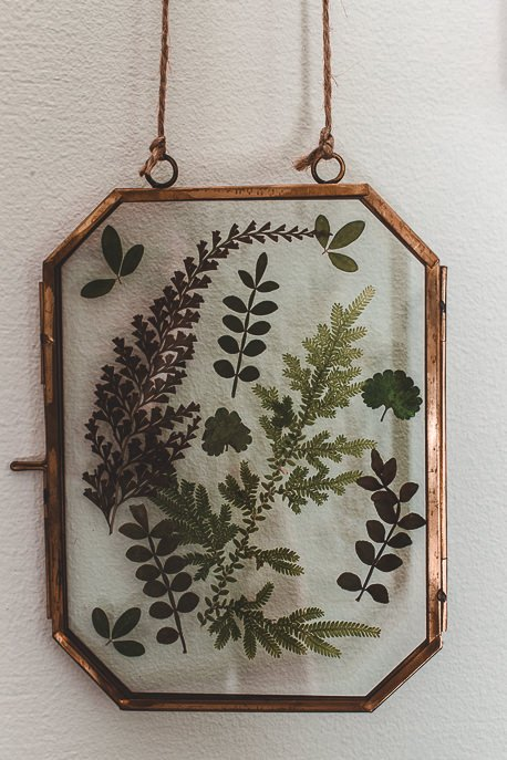 Pressed leaves in glass panes - Palmer & Gunn