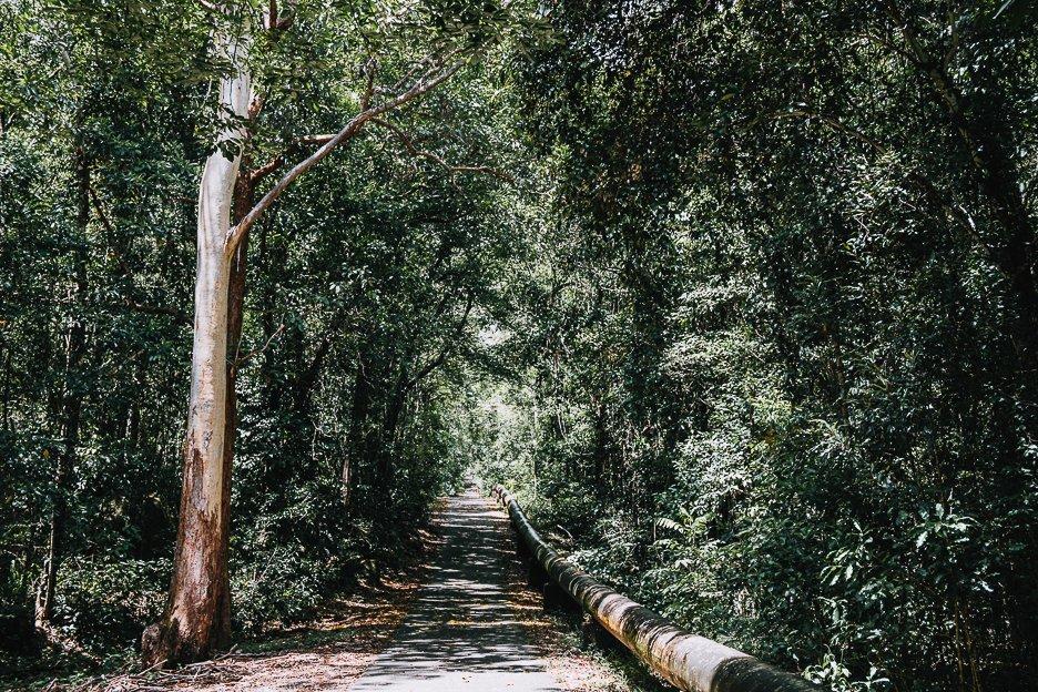 Walking the Behana Gorge Road Walking Track
