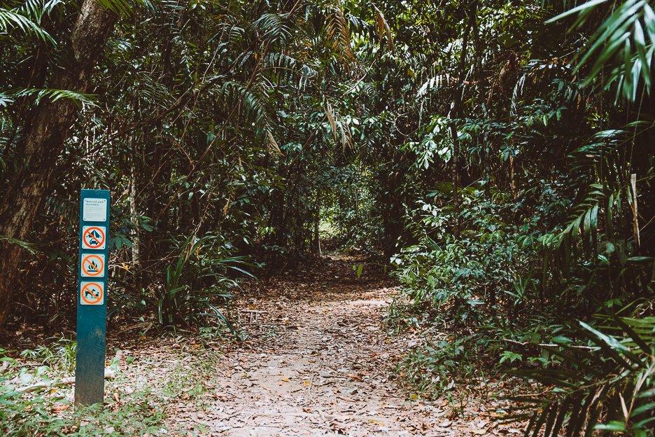The track to Emmagen Creek, Cape Tribulation